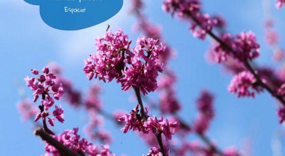 La Primavera Ya Está Aquí!